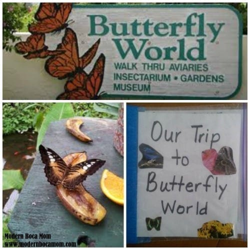 Butterfly World in South Florida