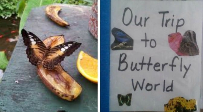 Making Memories with Your Family at Butterfly World in South Florida