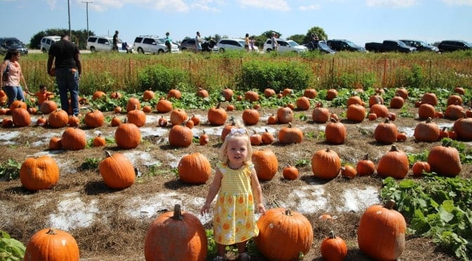 In Search of South Florida Pumpkin Patches?