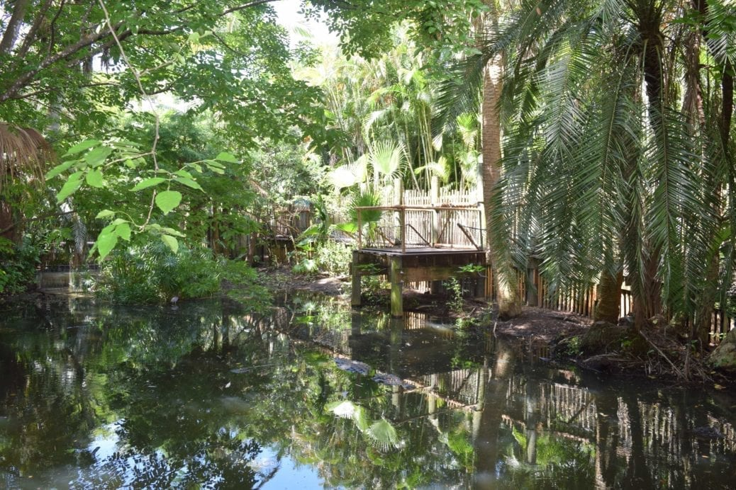 Alligator Alley Open at the Palm Beach Zoo - Modern Boca Mom