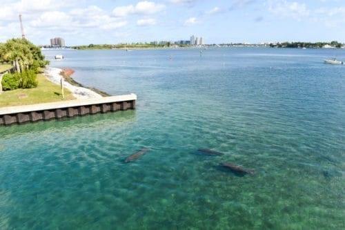 Manatee Lagoon Palm Beach